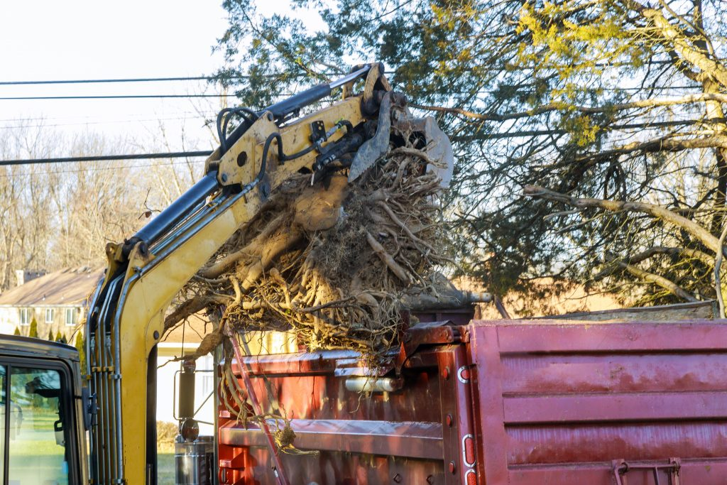 tree roots being removed and disposed of by a professional service before buckling concrete could occur